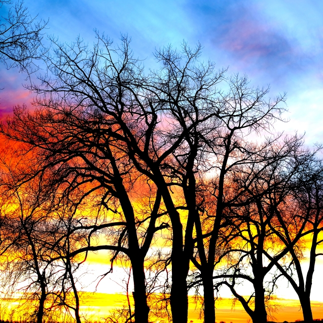 Color and Trees. JPG